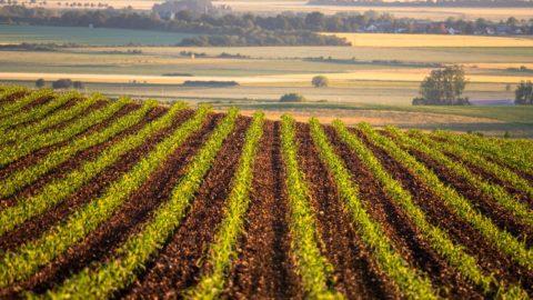 Agro21: Nejlevnější půda byla vJeseníku, nejdražší u Chebu